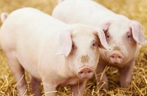 未来猪价预测!18年猪价到底能涨还是跌?