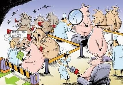有效防控各类猪传染病的几点建议