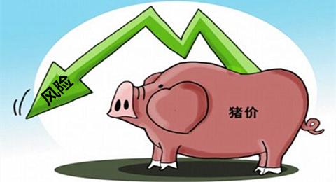 猪价今日涨幅0.03元,警惕与利好并存