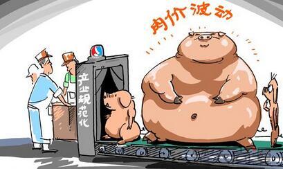 需求量增加!生猪价格能不能和屠宰量一起上涨?