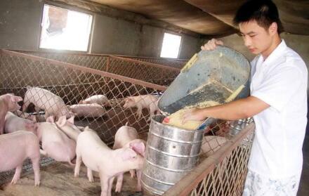 """都说养猪是""""刀口舔血""""的行当,养猪最怕什么"""