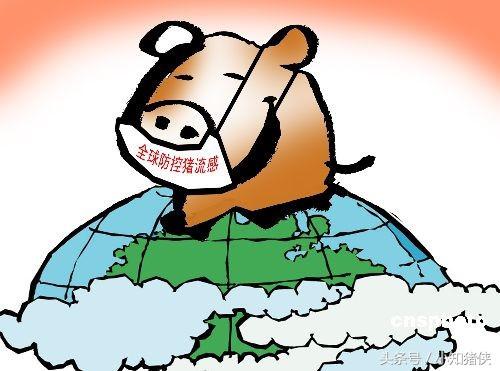 老养猪户亲传:如何用土偏方轻松治疗猪的三大传染病!
