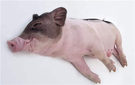 如何把一头猪卖个好价钱丨5本书教你营销之道