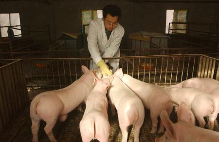 农村老猪倌无意泄露环保内幕,原来他每年都是这样秒过环评的!