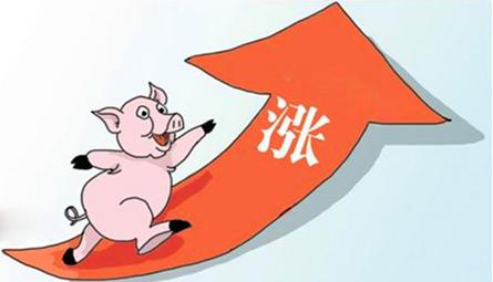 """""""破七奔八""""的猪价,屠企连续压价,猪价还能飞吗?"""
