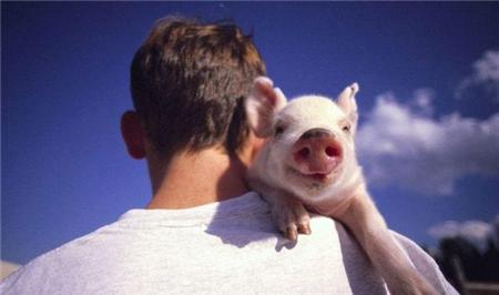 如何做一个出色的猪场管理人员?