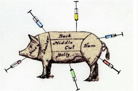 猪场技术,养猪人你会打针吗?这5点应该注意