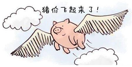 原料都涨价了,猪价不涨合适么?当然不合适啊