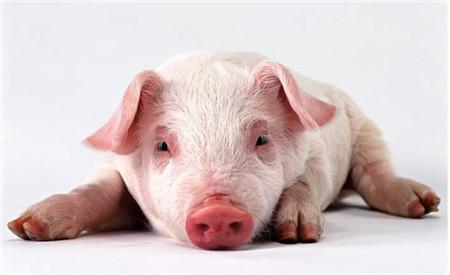 12月份以来生猪价格普遍上涨的态势
