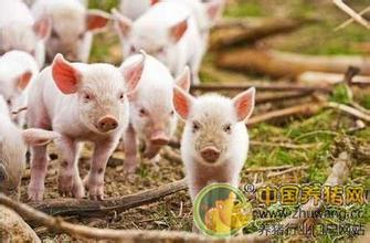 据研究部数据统计,2017年12月7日全国各省外三元猪均价为15.02元/公斤,较昨日上涨0.04元/公斤,较上周同期猪价(11月30日)上涨0.46元/公斤。