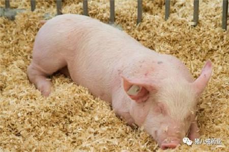 常见猪病及其防治——共计30个病