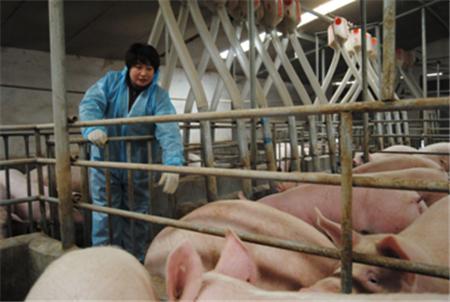 四季度是生猪育肥集中期,养大猪还赚钱吗?这篇文章告诉你!