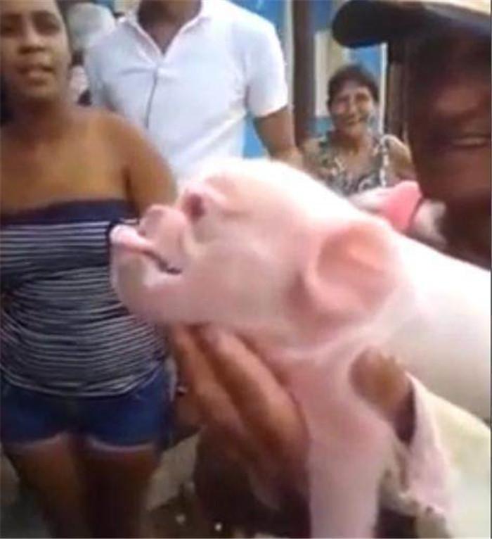 """母猪生下""""神秘怪猪"""",网友戏称:这是猴哥和八戒的结合体!"""