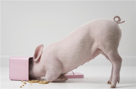 养猪资讯 行业点评 > 正文    今年很多养殖户都是一肚子的委屈,不是