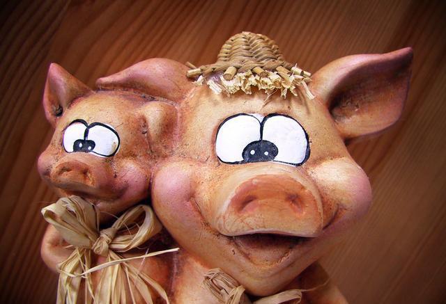 明年你还养猪吗?养殖户:难赚的钱,操不完的心……