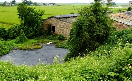 为什么猪场要做好绿化,不止是因为环保还是因为有这些好处!