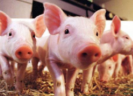 趋势!20个畜牧企业已进驻,预计2020年出栏生猪3千万头