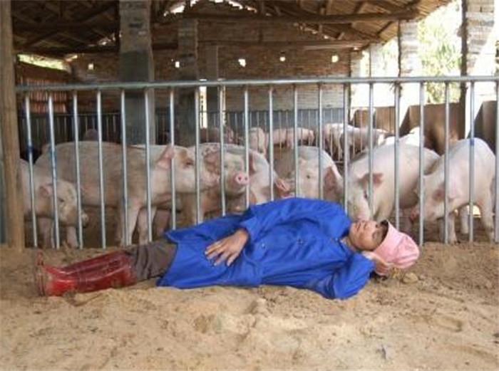 农村懒汉养猪两年不清粪,为什么还得到大力推广?