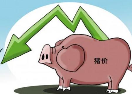 猪价出现了下跌,会不会再次涨回去?压栏还是出栏?