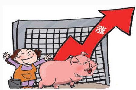 养猪户别着急,这三大理由揭晓猪价为何继续看涨