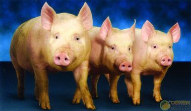 成本优势才是目前养殖企业取胜的关键