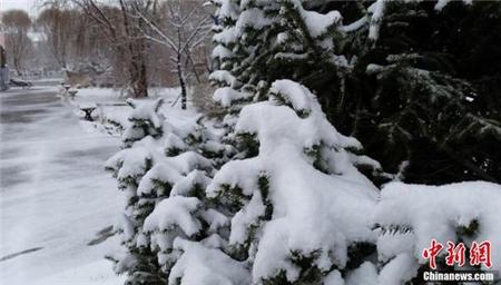 我国24省份将现雨雪天气 猪价有望摆脱盘整