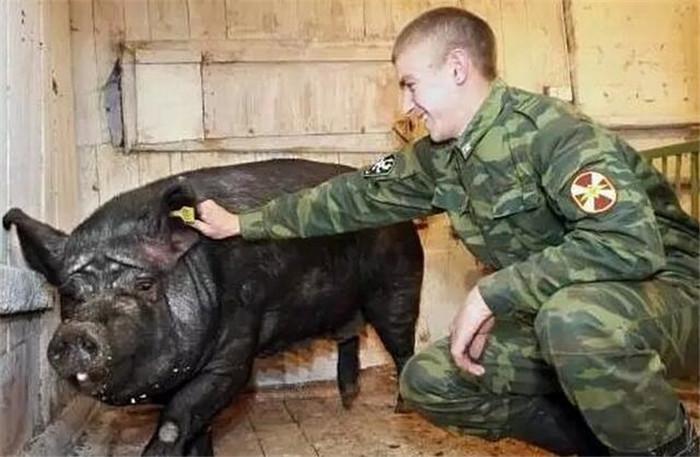 如果俄罗斯将向中国出口猪肉,猪价会下跌吗?