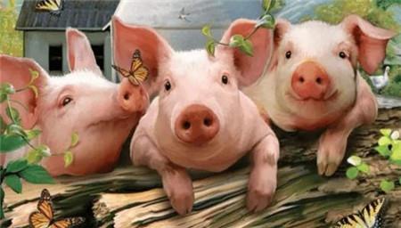 影响猪价的不是猪的多少而是它 搞懂起码卖个阶段性高价