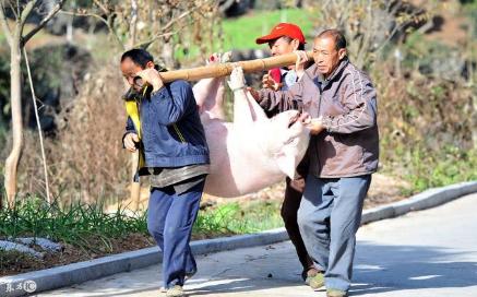 猪价稳步向前,2018春节前猪价能否破八仍扑朔迷离?