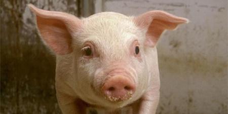 养猪20年,即将告别行业,谁来听听他的心声!