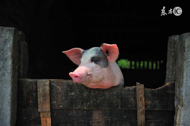这里有一份2018年猪价预测,你要不要看?
