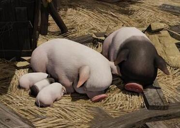 2017年12月17日(20至30公斤)仔猪价格行情走势