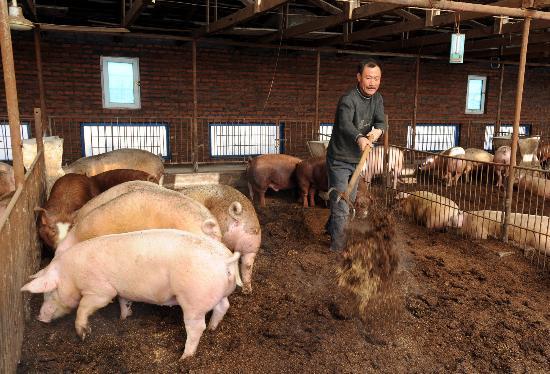 需求旺季将至 还有猪价四大利好因素 猪价怎能不涨?
