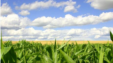 国家粮食局:秋粮收购量已达1.1亿吨