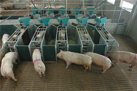关于冬季猪场保温和通风你想知道的都在这里了
