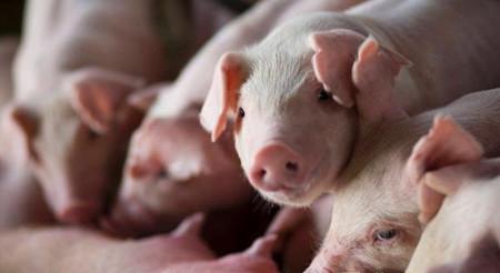 惊喜?一周后全国养猪户都要交的环保税,唯独这类养猪人不用!