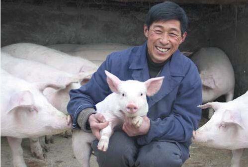 """""""若要猪无病,必须要四净"""",养猪户们知道啥意思吗?"""
