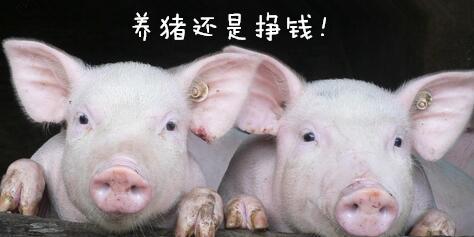 猪价早已突破15元/斤,16元/斤大关却迟迟没有动静?