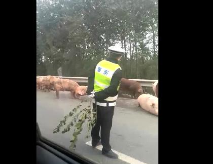 警察遇到无赖的猪了!我们不一样!不一样!
