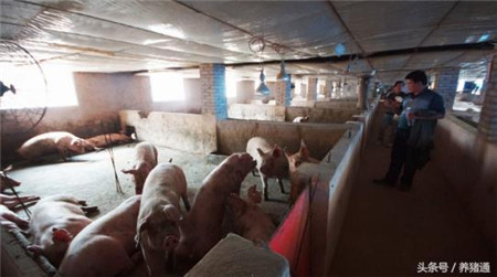猪场管理和猪场技术哪个更重要?