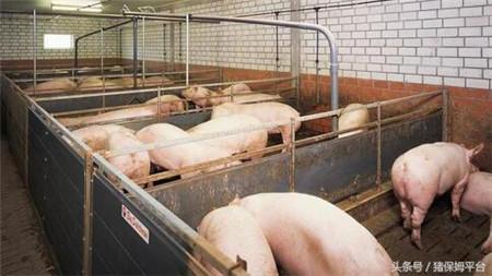 猪舍建造需要注意以下七点