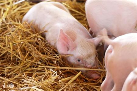 仔猪细菌性腹泻的预防措施