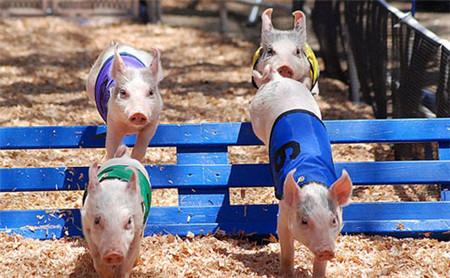雨雪天气基本结束,未来养猪户还能期待什么?