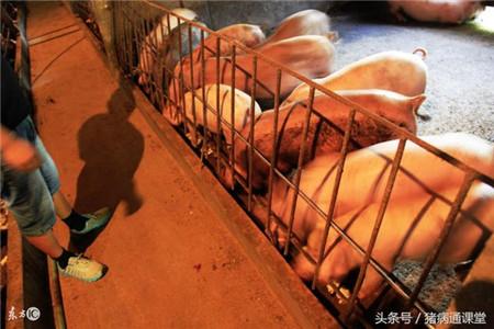 猪场消毒的组成部分有哪些及注意细节有哪些?