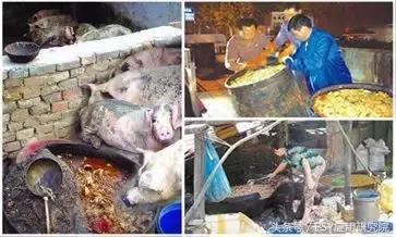 """泔水养猪""""低本巨毒"""",为了您和家人的健康,请注意"""