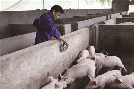 农村不让养猪了?错!2018年养猪的农民恐怕会增多