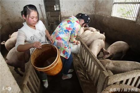 猪场臭味带来损失大,养猪人5个办法解决,你选哪一个