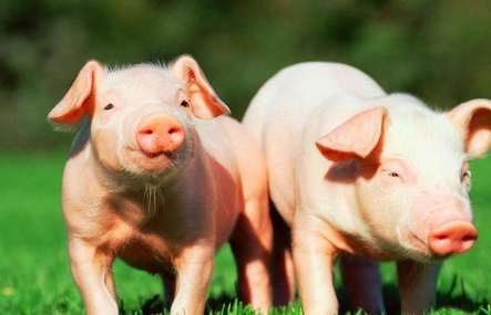 江苏省打响全国第一枪!率先关闭所有不合格生猪屠宰企业!