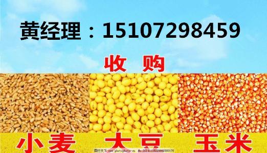 2018年最新玉米市场行情趋势 民发收购玉米