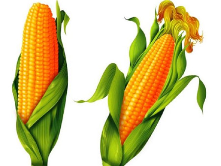 注意!玉米价持续上涨,这是否意味着猪价也会上涨?